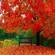 زیبایی های فصل پاییز - پاییز